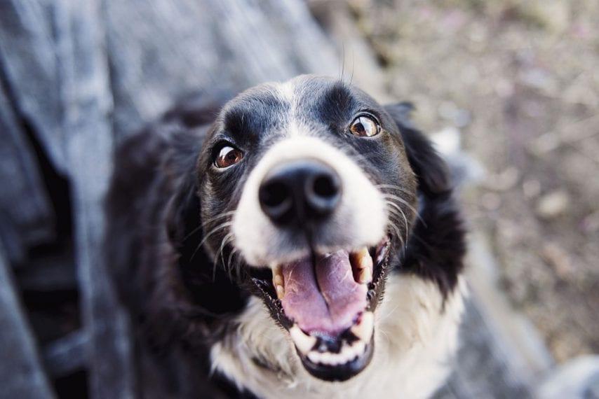 Letselschade hondenbeet